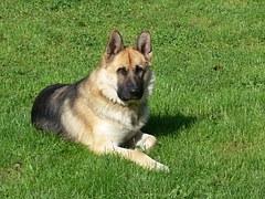 dog-1232299__180 Wpaczocha Pixabay FREE No Attribution Required