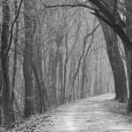 haunted-path
