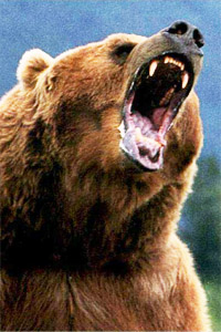 bear-scream.jpg