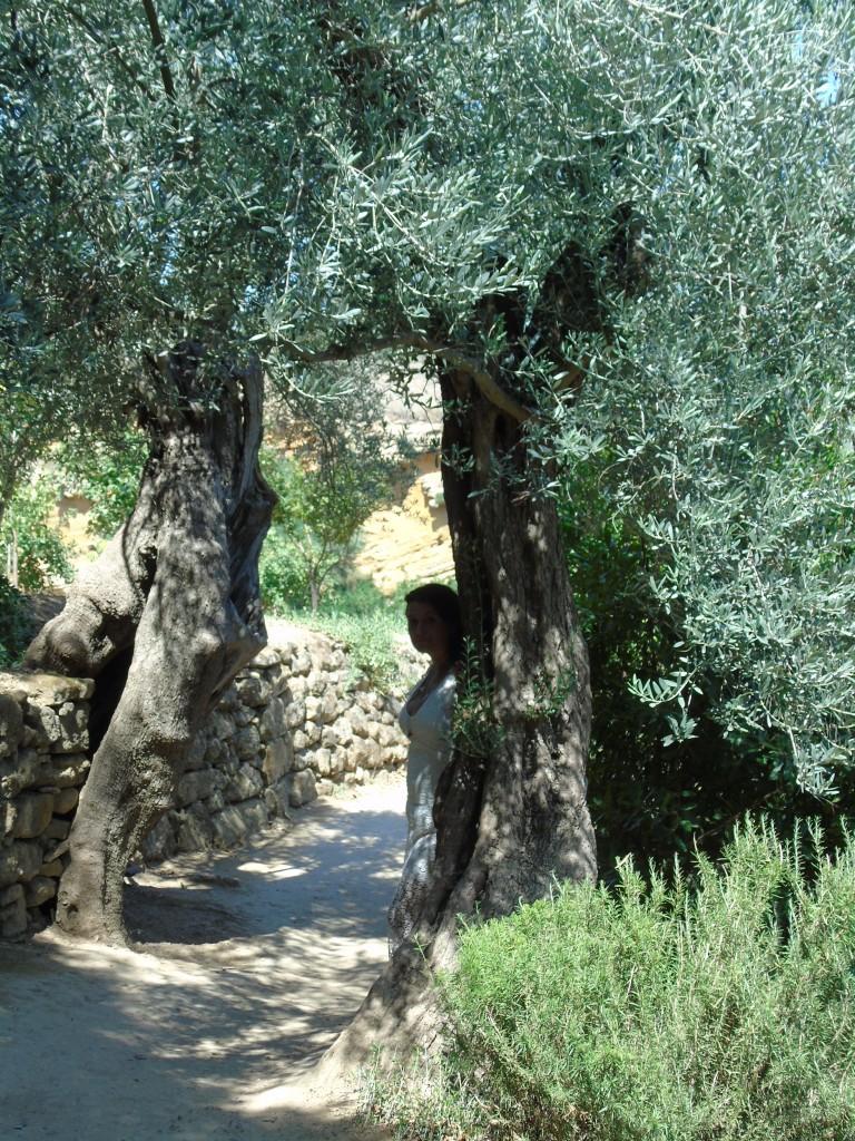 Agrigento (629)