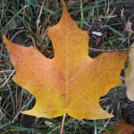 Naturalistic Traditions: All Things October