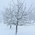 Fruit Tree in Winter Clothing, by Magnus Rosendahl. Public domain.