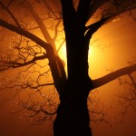 Tree In Fog At Night by Petr Kratochvil