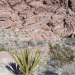 Blue sky, red rocks, hardy plants teach spiritual lessons in Red Rock Canyon, Nevada