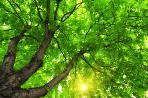 Under big green tree. Image by djgis via Shutterstock.