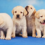 This is a difficult subject with no real appropriate photo. So here are some puppies. (Image via shutterstock.com)