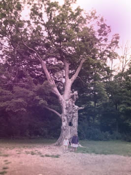 The Compassion Tree / Photo by Melissa Hill