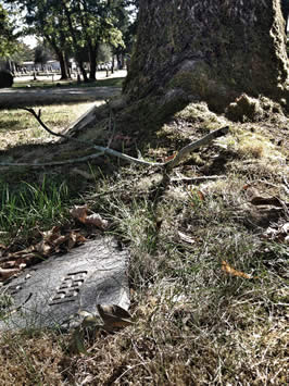 Tree roots, grass roots and ancestral roots / Photo by Spiritscraft