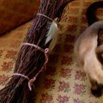 a completed broom next to a cat