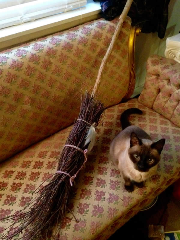 the final broom leaning on a couch next to a cat