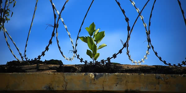 a sprouting plant surrounded by barbed wire