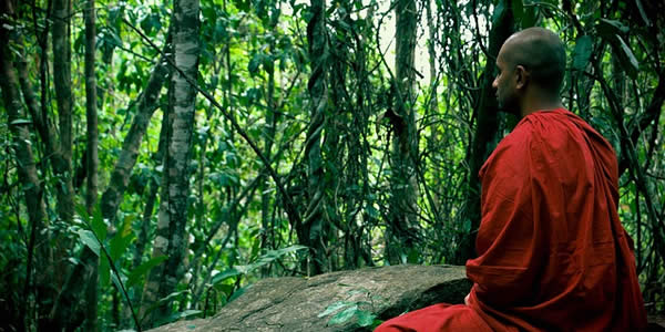 a monk in orange robes meditating in a bamboo grove