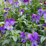 Adventures in Wortcunning: Garden Therapy