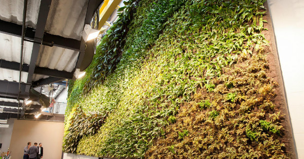 """Living Wall"" photo by Citrix Systems via Flickr.  Slightly modified by the editor.  CC 2.0 License"
