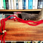 The Cartomancer: Self-Help