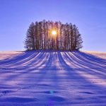 winter-sunrise-behind-the-trees-nature-hd-wallpaper-1920x1200-9534edit