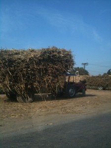 Sugarcane Truck on it's way into town