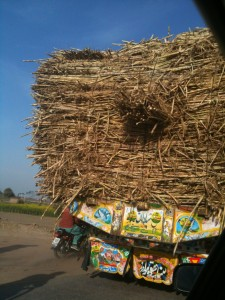 Backside view of a sugarcane truck on it's way into town