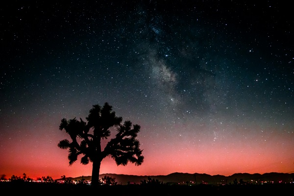 Joshua Tree National Park. Photo provided by Jihad Turk