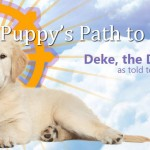 Deke the dharma dog