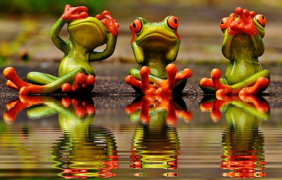 speak no evil hear no evil see no evil frogs