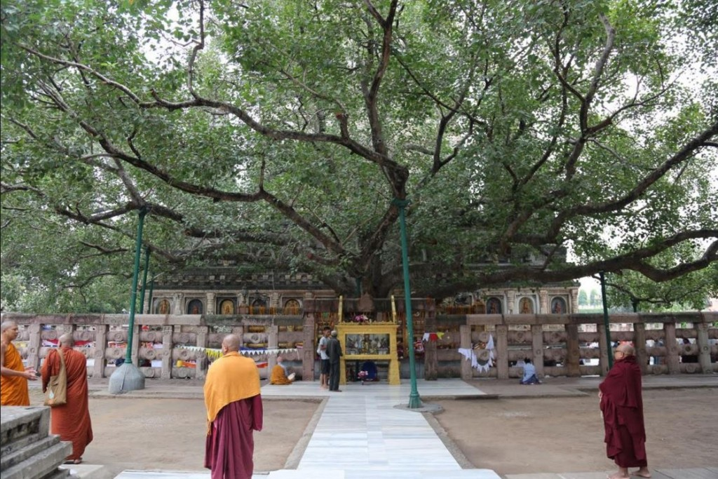 A view of the Bodhi tree where the Buddha gained awakening (courtesy National Geographic)