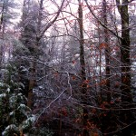 First snow of autumn. Maine 2014.