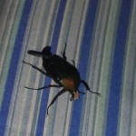 Bugs of Africa