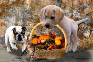 Thanksgiving animals-2829373__480