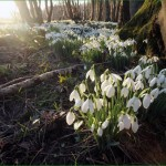 Celebrating Imbolc Quietly