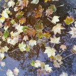 Falling off the wheel: Menopausal Mother Nature