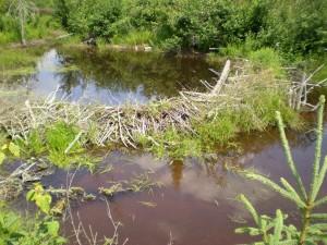 Beaver Dam by Charles Rondeau. Public domain image courtesy Publicdomainpictures.net