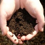 Dirt—– a Poem