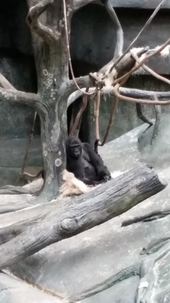 zoo4b1