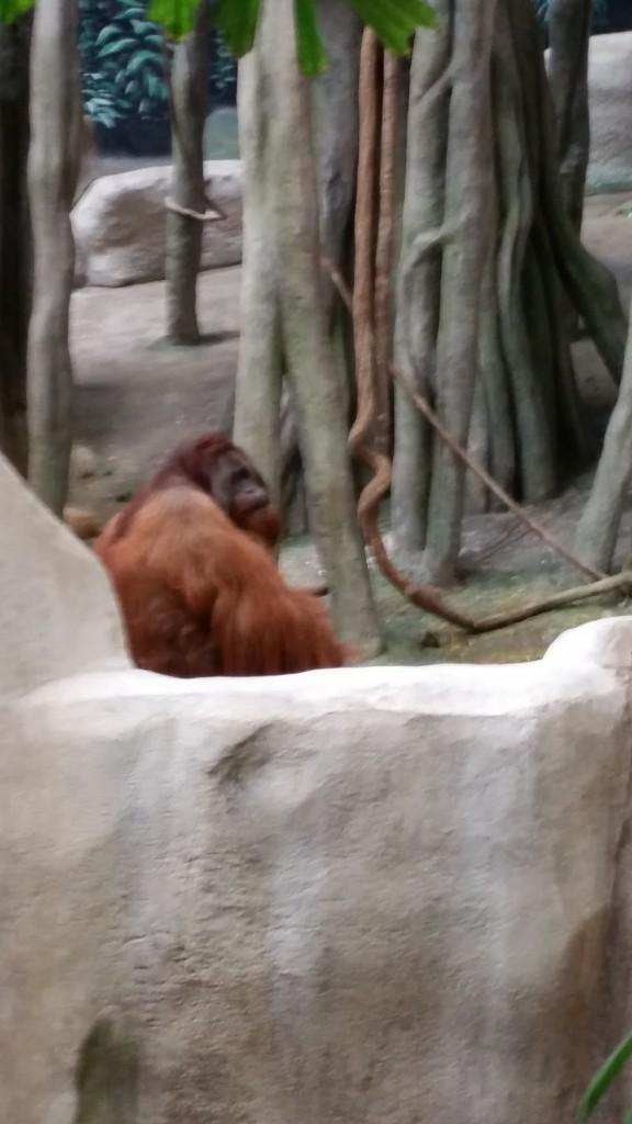 zoo4b3