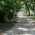 Trips Back in Time— Hopsewee Plantation