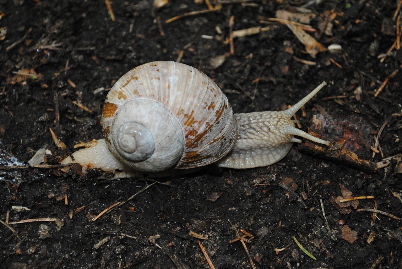 snail-851816_1280