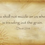 "What Does ""Do Not Muzzle The Ox"" Mean In The Bible? A Biblical Definition"