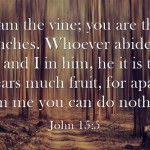 John 15: Jesus Is The True Vine Bible Study And Commentary