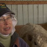 The Nuns Who Run a Cattle Ranch