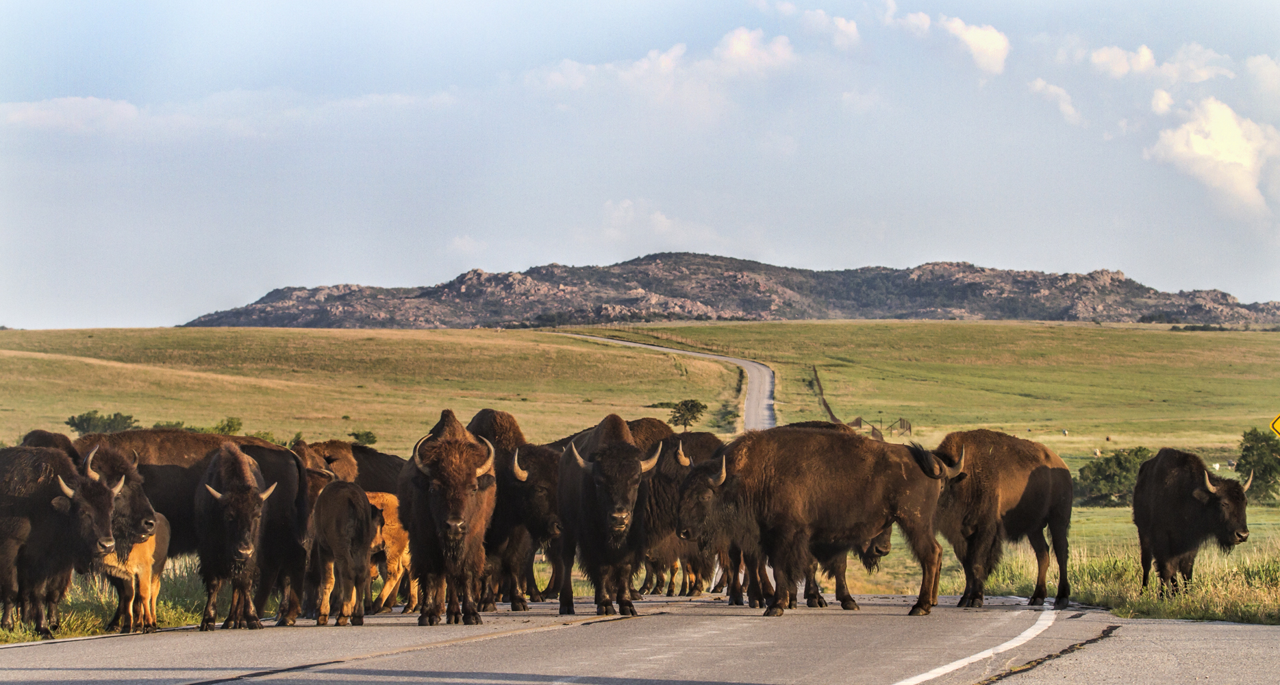 I Want to Live in a World Where #WaterisLife & Bison Bring Courage