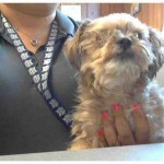The Mysteries of Faith: Saving Chauncey The Shelter Dog