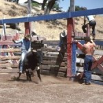 Bullrider Photo (c) Hank Fox