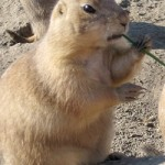 Groundhogs and their connection with Christianity