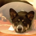 Don't earn the cone of shame