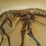 Hadrosaur fossil from about 150 million years ago