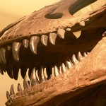 Organic Material Found in T-Rex Fossils—Evidence for Young Earth?