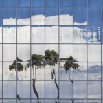 Palm Trees Under Glass
