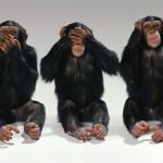 Speak no evil, see no evil, hear no evil. (But click to enlarge.)