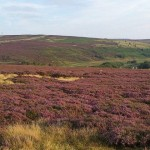 "The Yorkshire Moors (""Wuthering Heights"" country)"